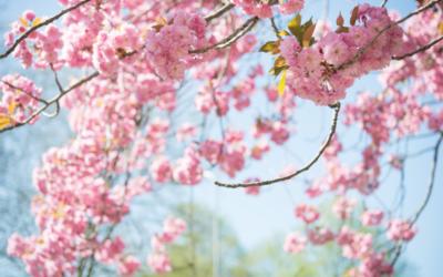Jar – sezóna alergií je tu!